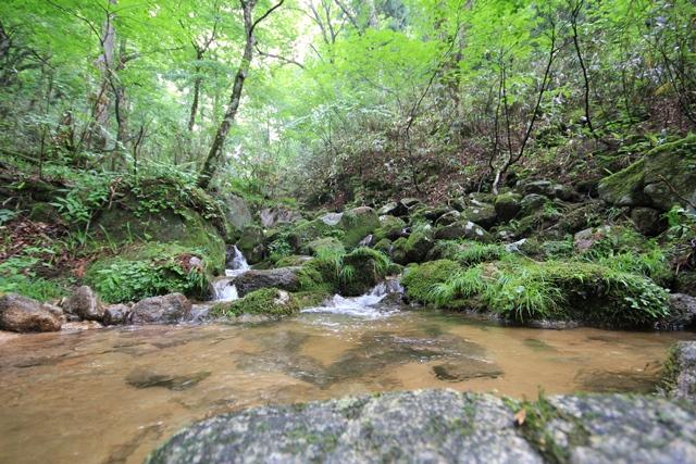西粟倉村原生林